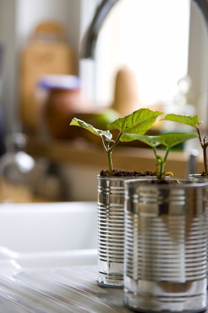 Stock Photo: 4278-6736 Recyclable tin cans with bean seedlings