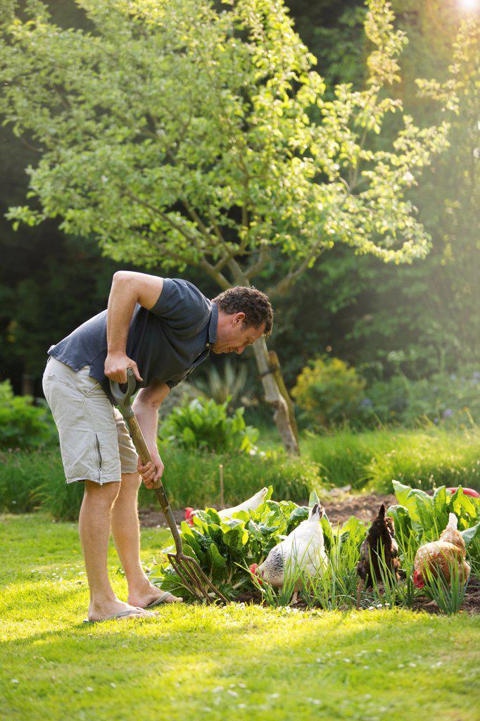 Stock Photo: 4278-9236 Man Gardening