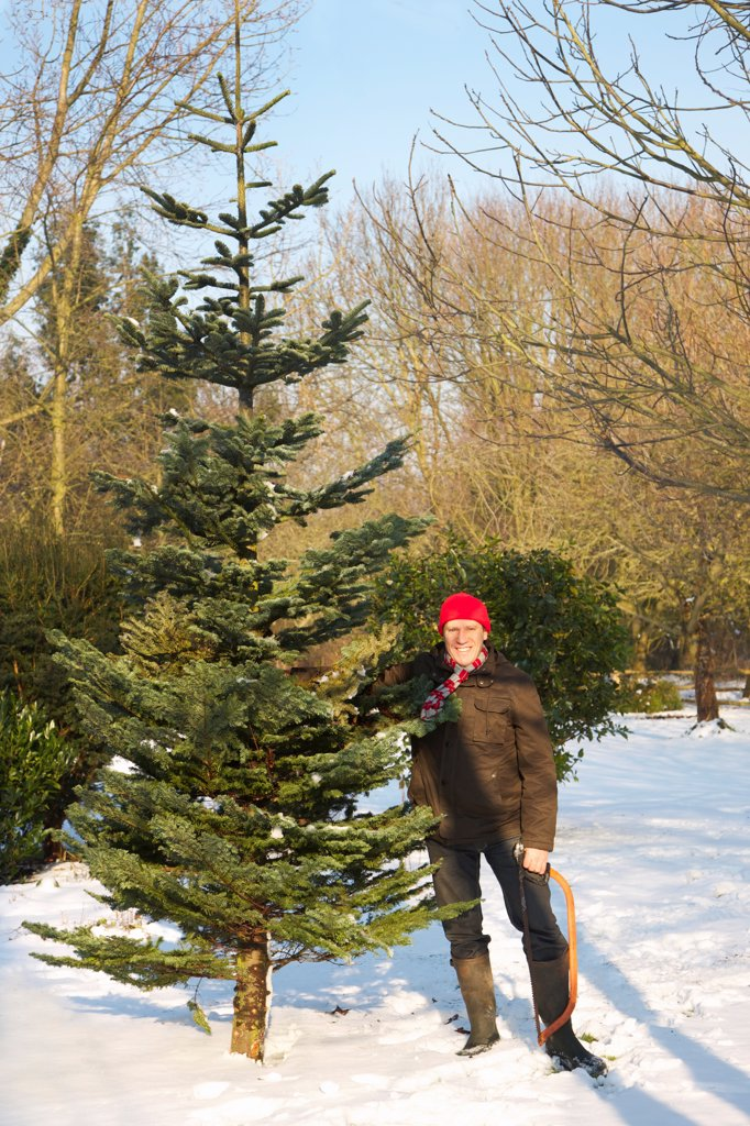 Stock Photo: 4278-9630 Man Holding Christmas Tree and Handsaw
