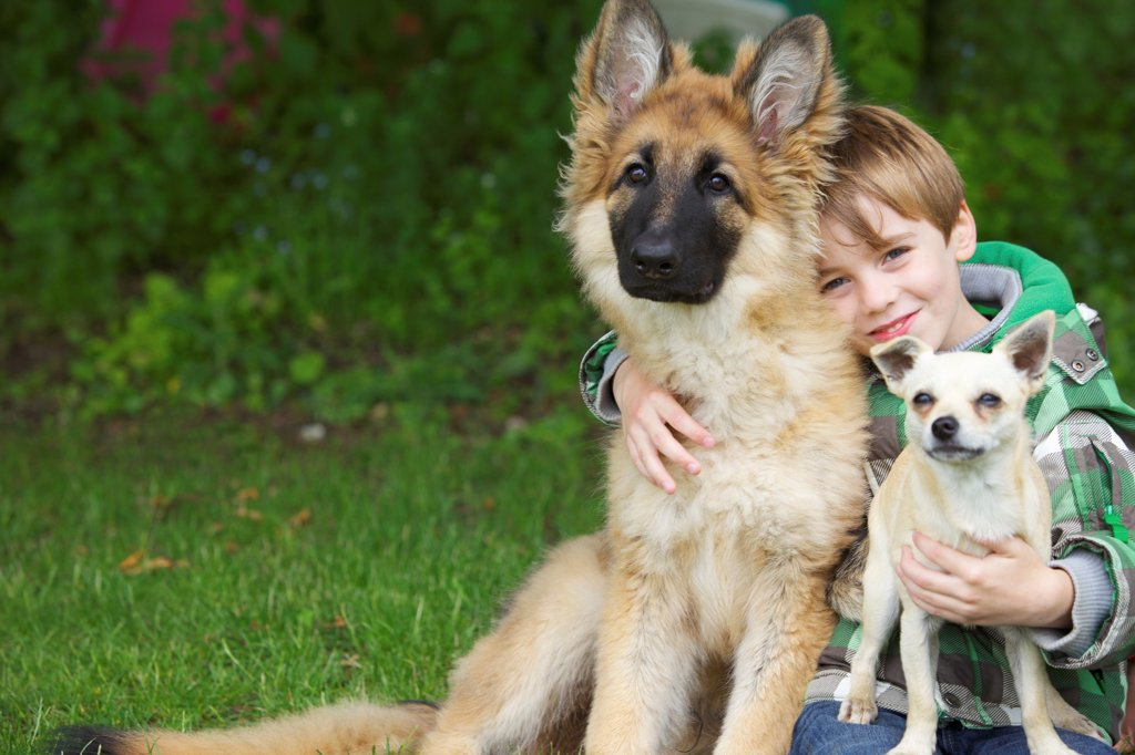 Stock Photo: 4278-9636 Boy Hugging Two Dogs