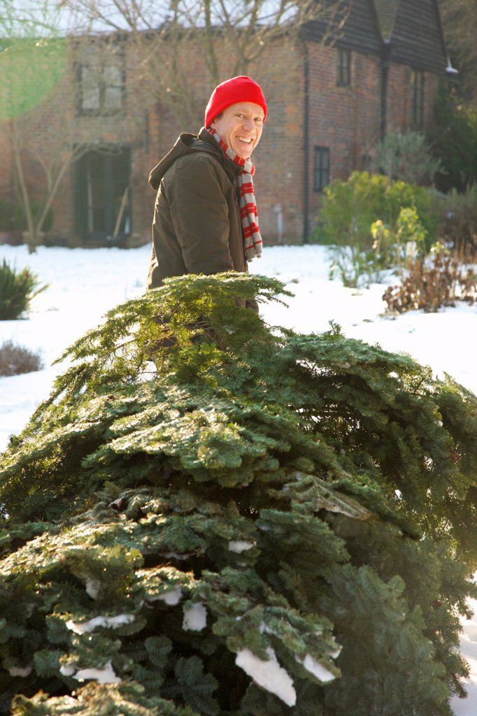 Smiling Man Dragging Christmas Tree : Stock Photo
