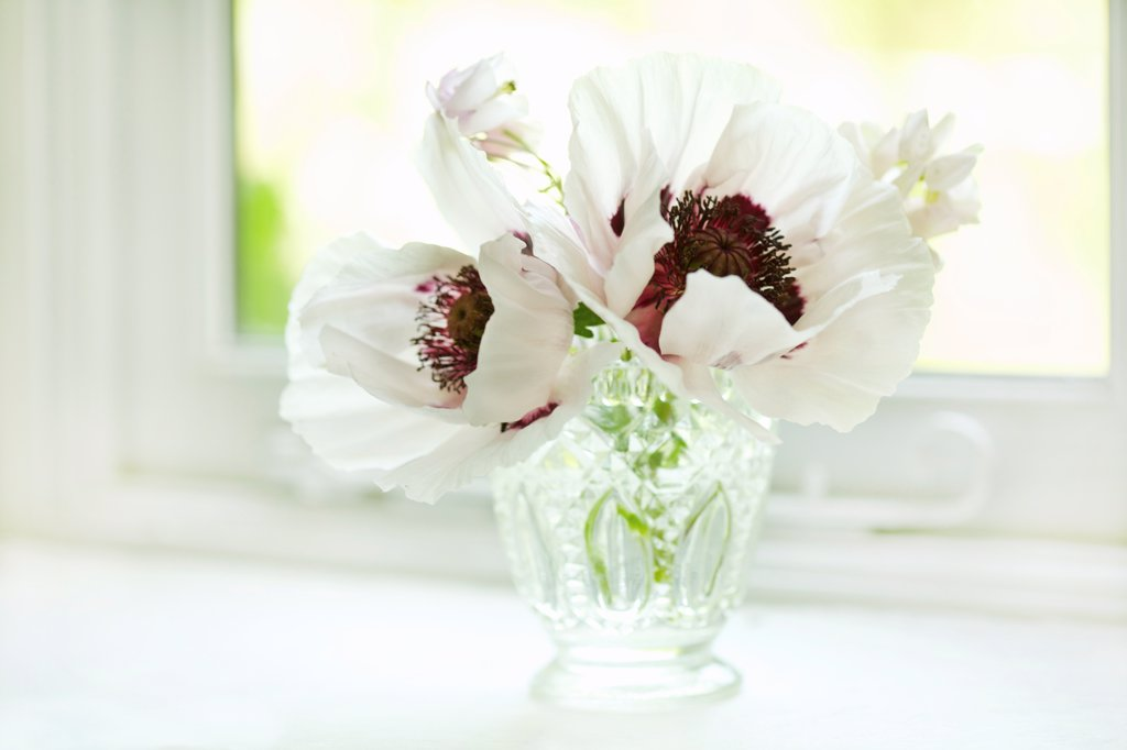 Stock Photo: 4278-9962 White Poppies in Crystal Vase