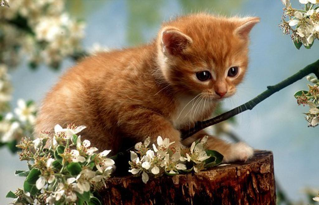 kitten next to blossoms : Stock Photo