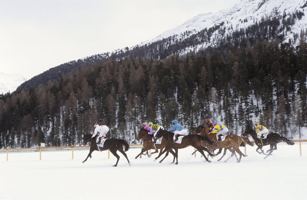 horse racing in snow - in St. Moritz : Stock Photo