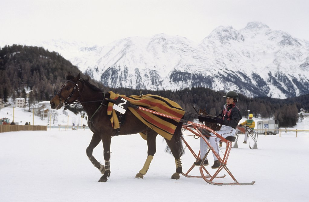 Stock Photo: 4279-13923 trotting race in snow - in St. Moritz