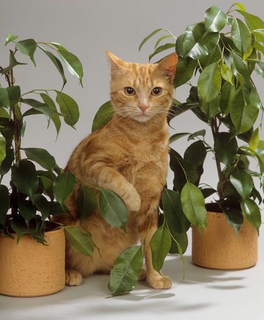 domestic cat between indoor plants : Stock Photo