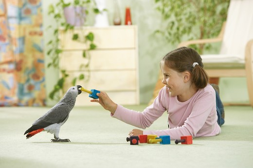 girl playing with Congo African Grey parrot, Psittacus erithacus : Stock Photo