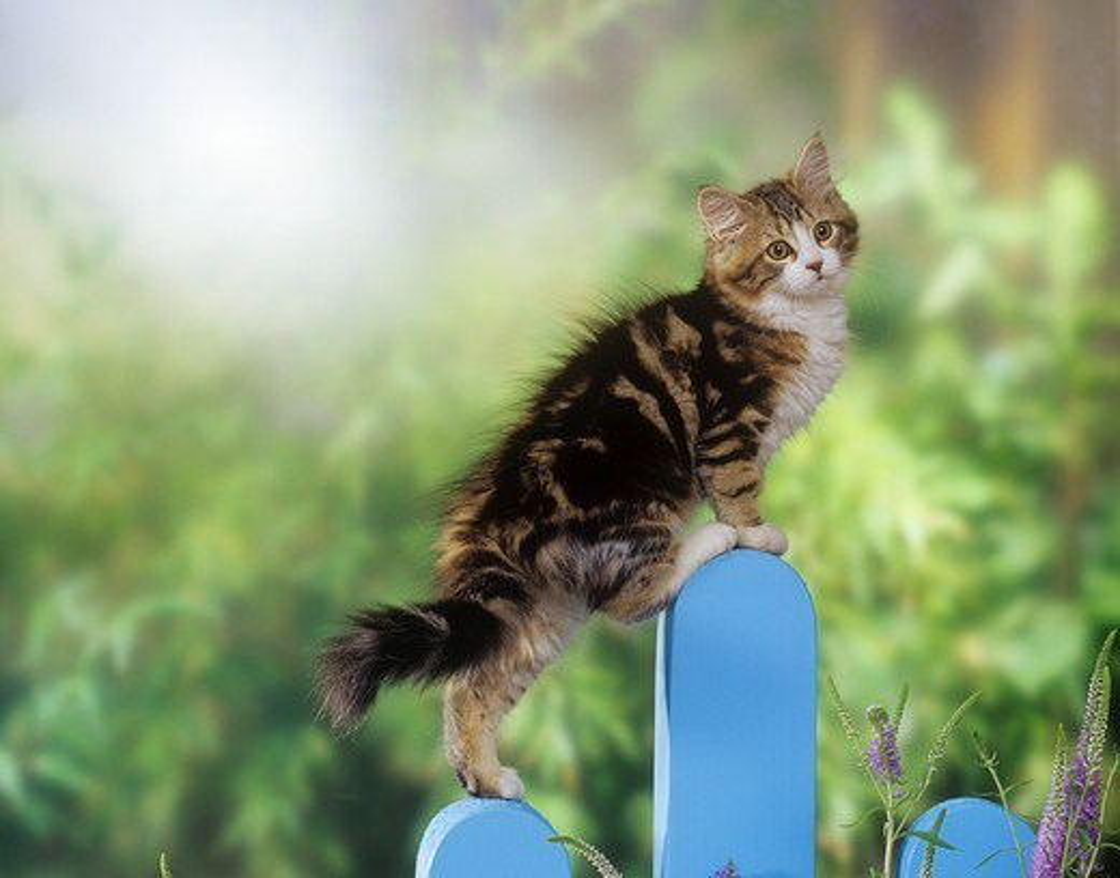 Stock Photo: 4279-19689 kitten on fence