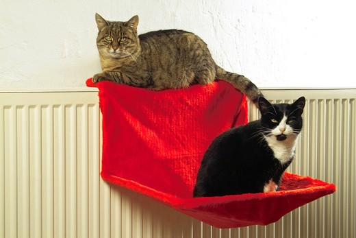 Stock Photo: 4279-19881 two domestic cats at sleeping place
