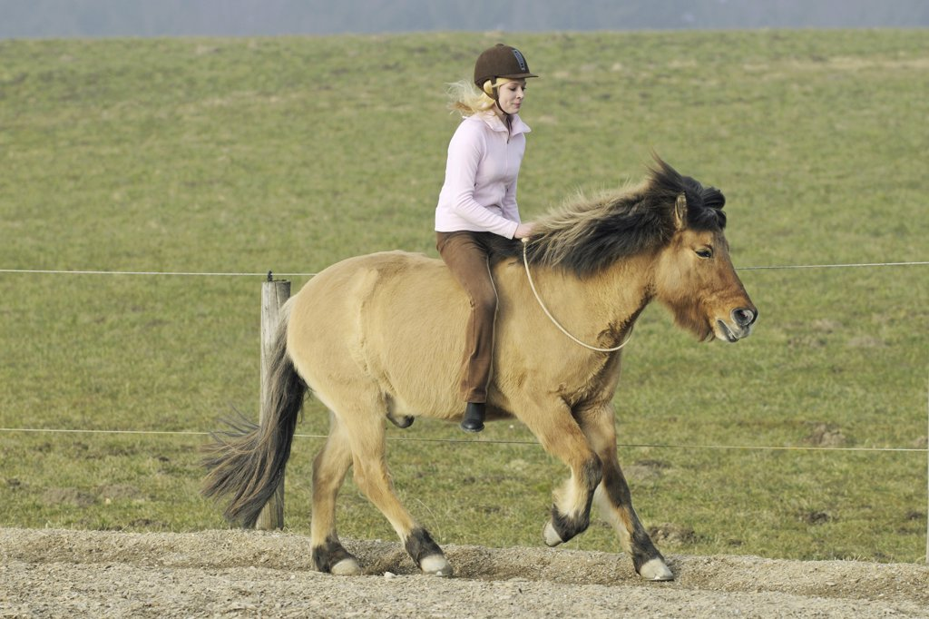 Stock Photo: 4279-23486 girl riding on Icelandic horse