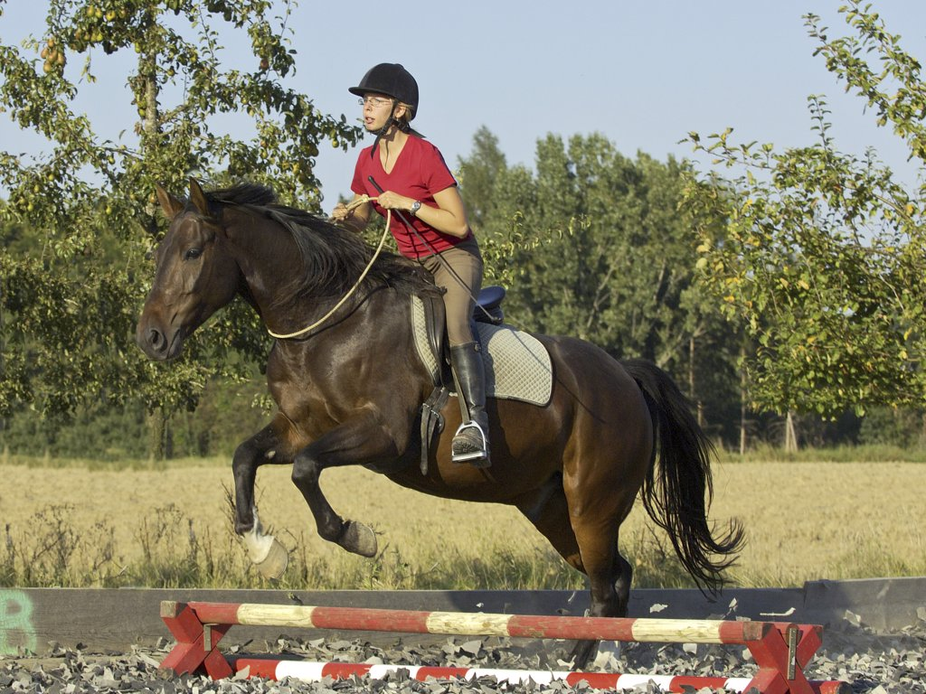 Stock Photo: 4279-23925 Horse jumping with neck ring only