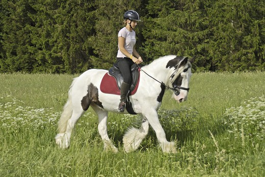Stock Photo: 4279-24094 Girl riding on back of an Irish Tinker horse trotting in a meadow