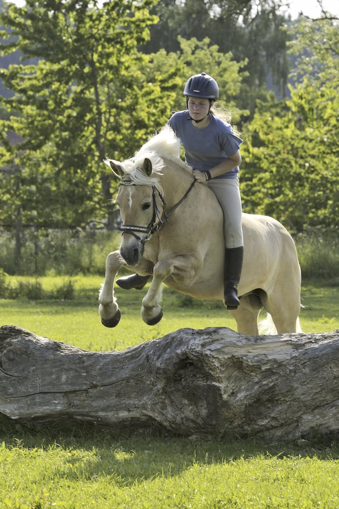 Stock Photo: 4279-25900 Girl jumping on Haflinger horse without saddle