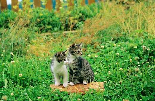 two kittens on meadow : Stock Photo