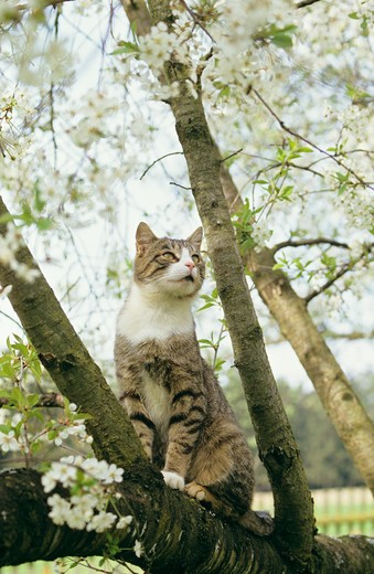domestic cat - sitting on branch : Stock Photo