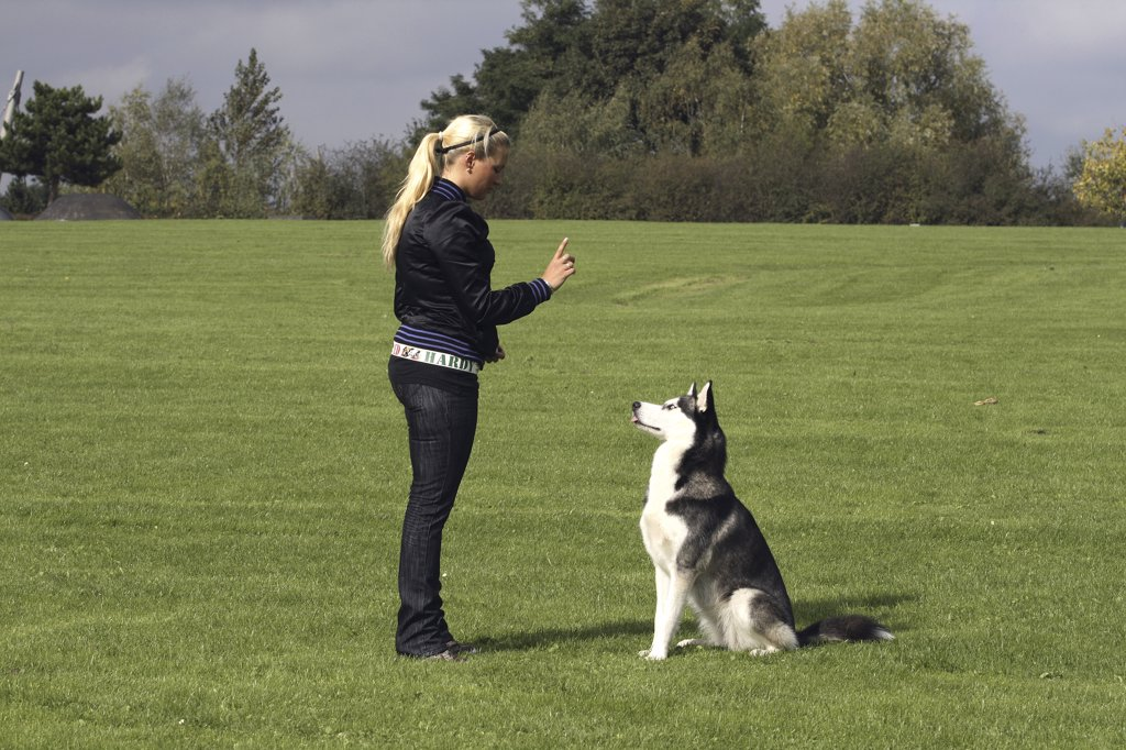 Siberian Husky dog and mistress : Stock Photo