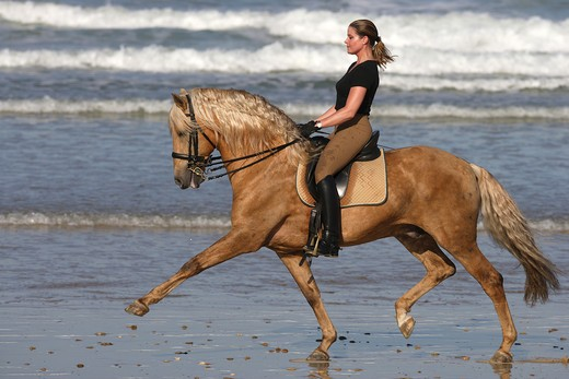 Stock Photo: 4279-30104 woman riding on Lusitano horse