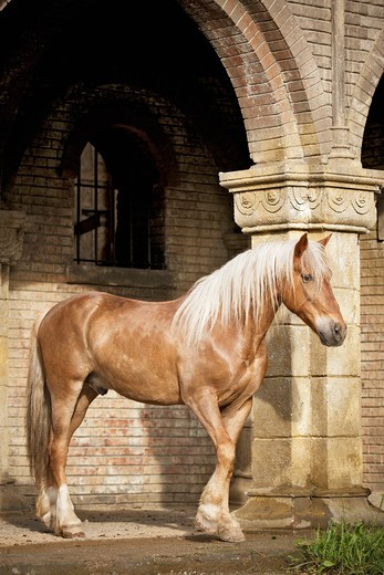 Cruzado horse - standing under archway : Stock Photo