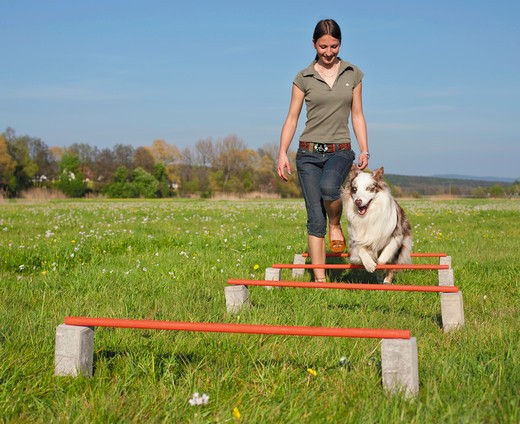Stock Photo: 4279-36620 woman and Australian Shepherd dog walking over hurdles