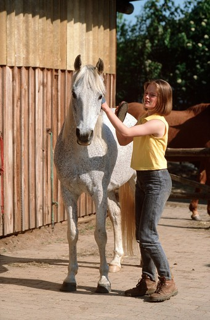 Stock Photo: 4279-3671 arabian horse