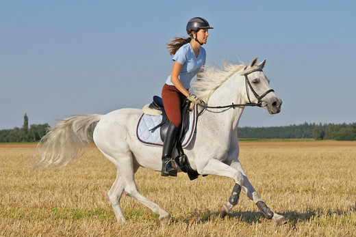 young woman riding on Bavarian warmblood horse : Stock Photo