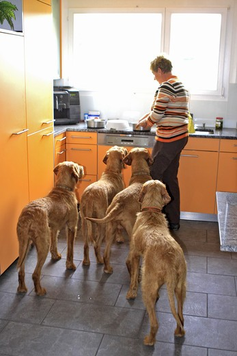 Stock Photo: 4279-39758 woman and Wirehaired Magyar Vizlas in kitchen