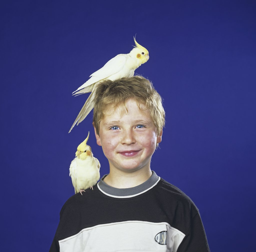 Stock Photo: 4279-41118 boy with two cockatiels