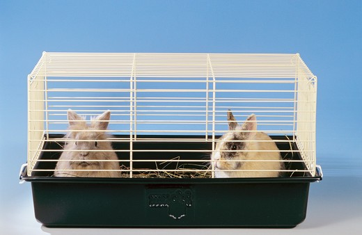 Stock Photo: 4279-42466 two dwarf rabbits in a cage