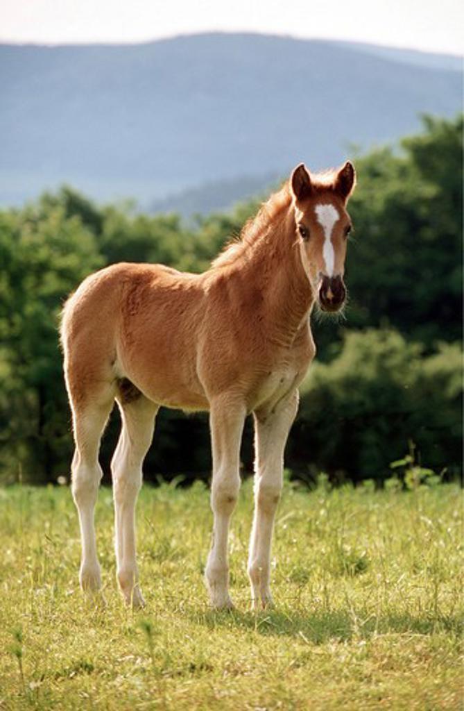 Stock Photo: 4279-4349 horse