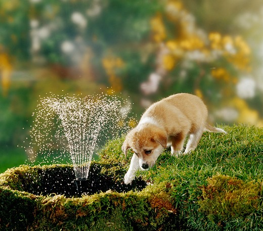 hybrid puppy at water-fountain : Stock Photo