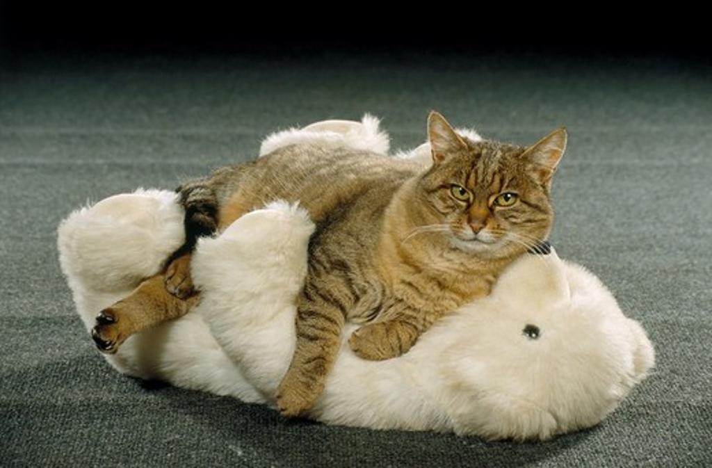 Stock Photo: 4279-6219 domestic cat lying stuffed animal
