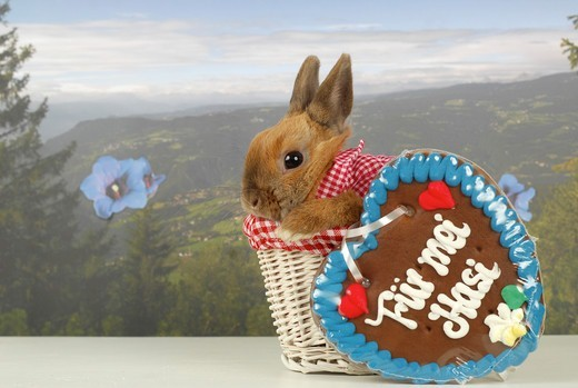 Stock Photo: 4279-63293 Domestic Rabbit, Dwarf Rabbit with a gingerbread heart in a basket in front alpine wallpaper scenery
