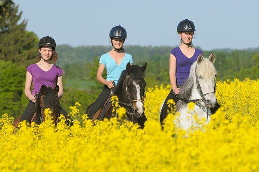 Stock Photo: 4279-63296 Three young woman riders on Paso Fino horses riding between rape fields. Model release available. For editorial usage only