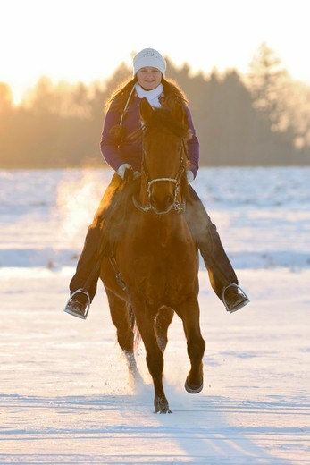 Stock Photo: 4279-63611 Riding out on a Paso Fino in winter at sunset