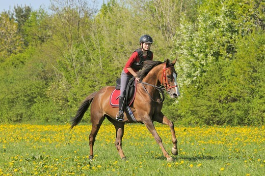 Stock Photo: 4279-63664 14 years old girl wearing a body protector galloping on a thoroughbred mare in spring