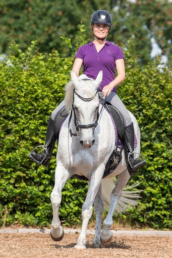 Stock Photo: 4279-71106 Anglo-Arabian, Anglo-Arab. Gray mare with rider trotting in a riding arena