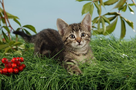 young domestic cat lying in grass : Stock Photo