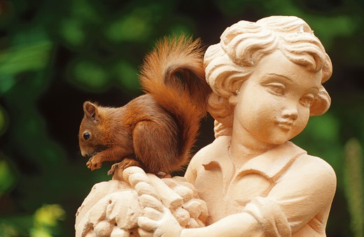 Stock Photo: 4279-8141 European red squirrel on statue, Sciurus vulgaris