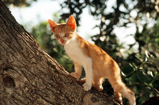 young domestic cat - standing on tree : Stock Photo