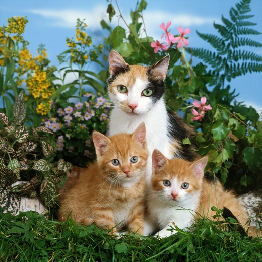 domestic cat with two kittens : Stock Photo