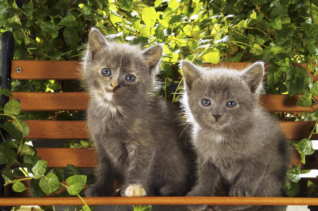 Stock Photo: 4279R-48610 two kittens - sitting on bank