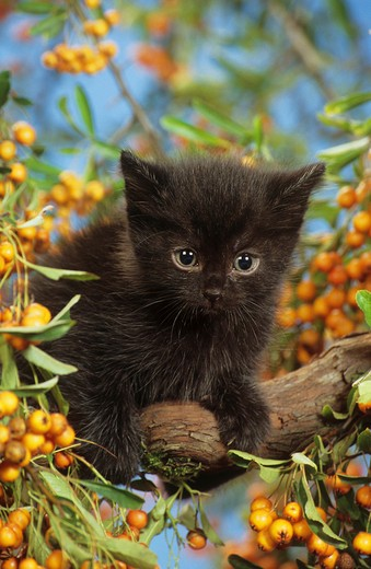 black kitten on tree : Stock Photo