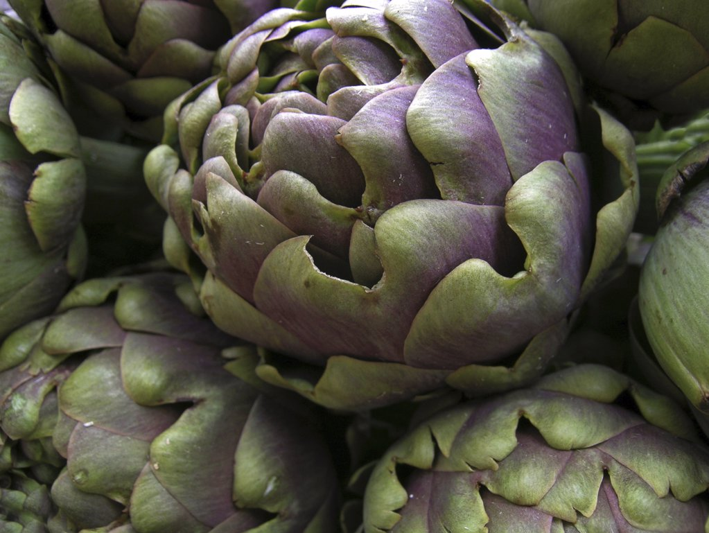 Stock Photo: 4279R-50415 Globe Artichoke , Cynara scolymus