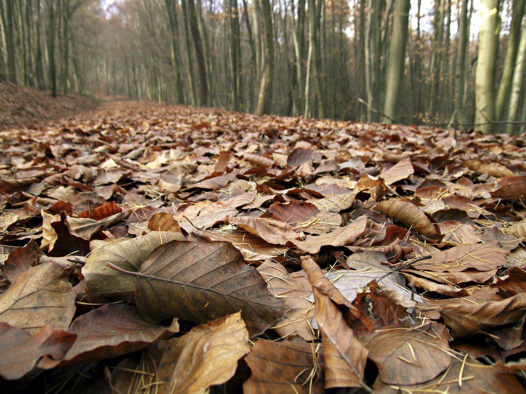 Stock Photo: 4279R-50643 foliage