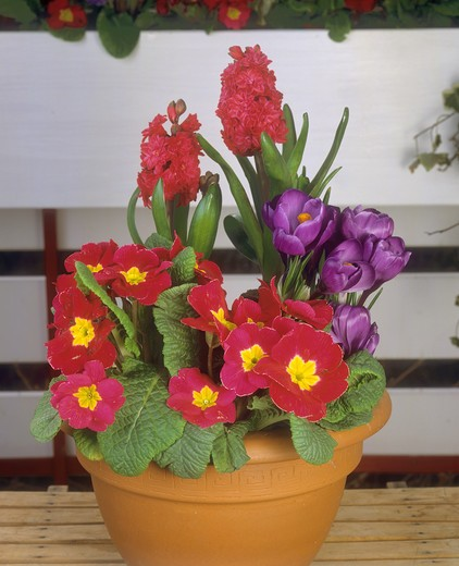 flowerpot with different flowers : Stock Photo