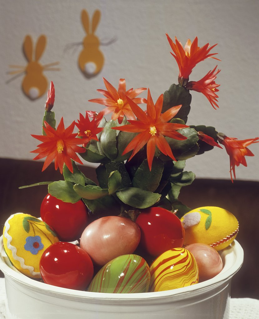 bowl with cactus and Easter eggs : Stock Photo