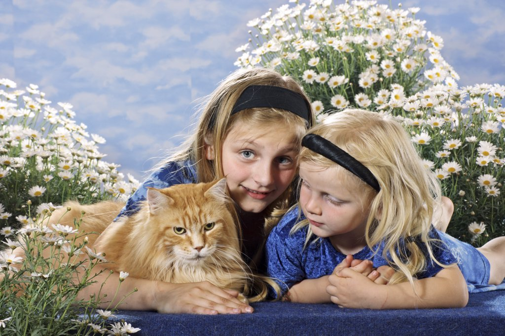 Stock Photo: 4279R-53116 two girls with Maine Coon