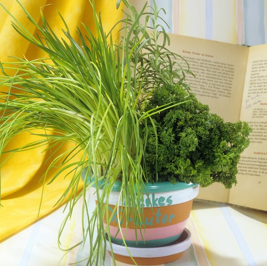 flowerpot with different herbs : Stock Photo