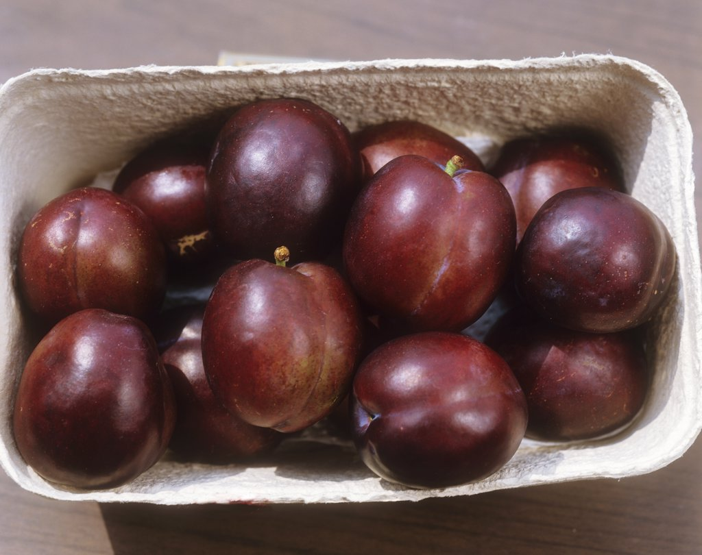Stock Photo: 4279R-59860 plums