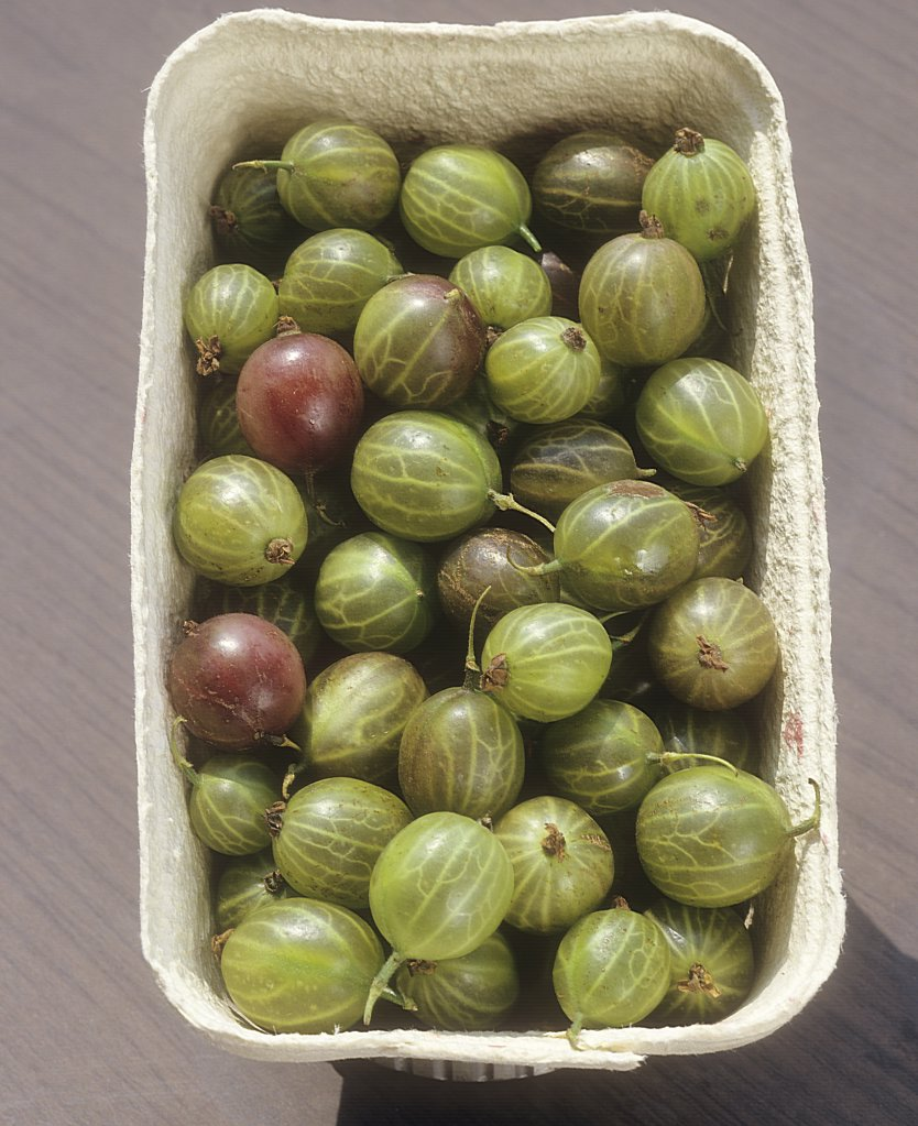 Stock Photo: 4279R-59861 gooseberry